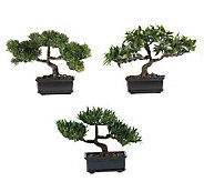 12&quot Bonsai Plant Collection (Set of 3) by Nearly Natural - H179288