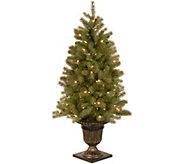 National Tree Company 4 Lit Downswept DouglasFir Tree - H294388
