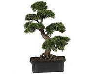 Cedar Bonsai 24 Plant by Nearly Natural - H179290