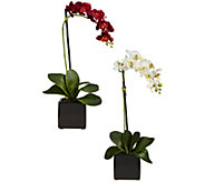 Set of 2 Phaleanopsis Orchids with Vase by Nearly Natural - H296991