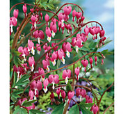Robertas 4-Piece Pink Bleeding Hearts - H287893