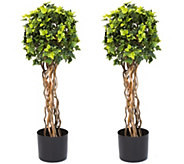 Pure Garden English Ivy Single Ball Topiary Trees, Set of Two - H291698