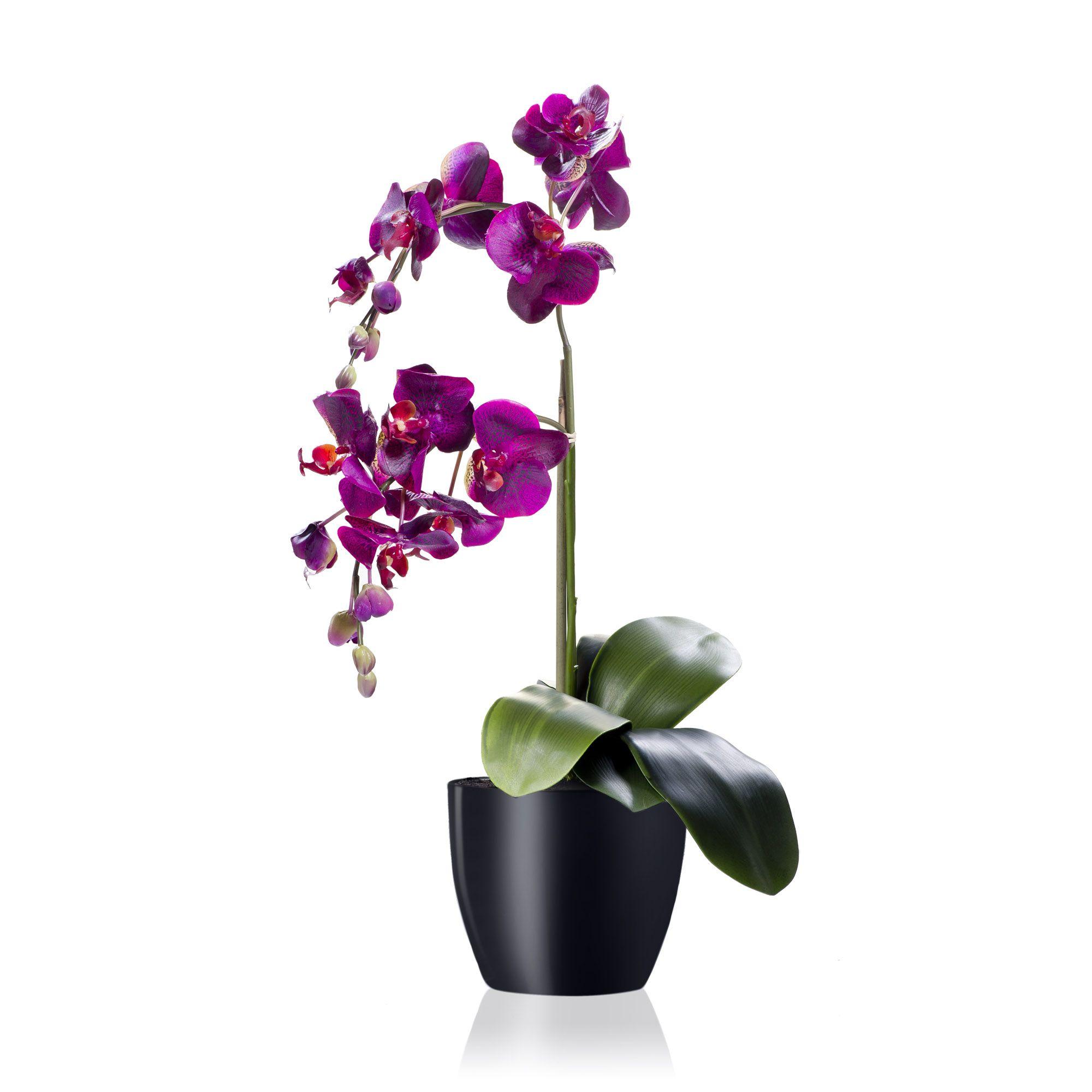 Peony orchidea dipinta a mano in vaso di ceramica qvc italia for Vaso orchidea