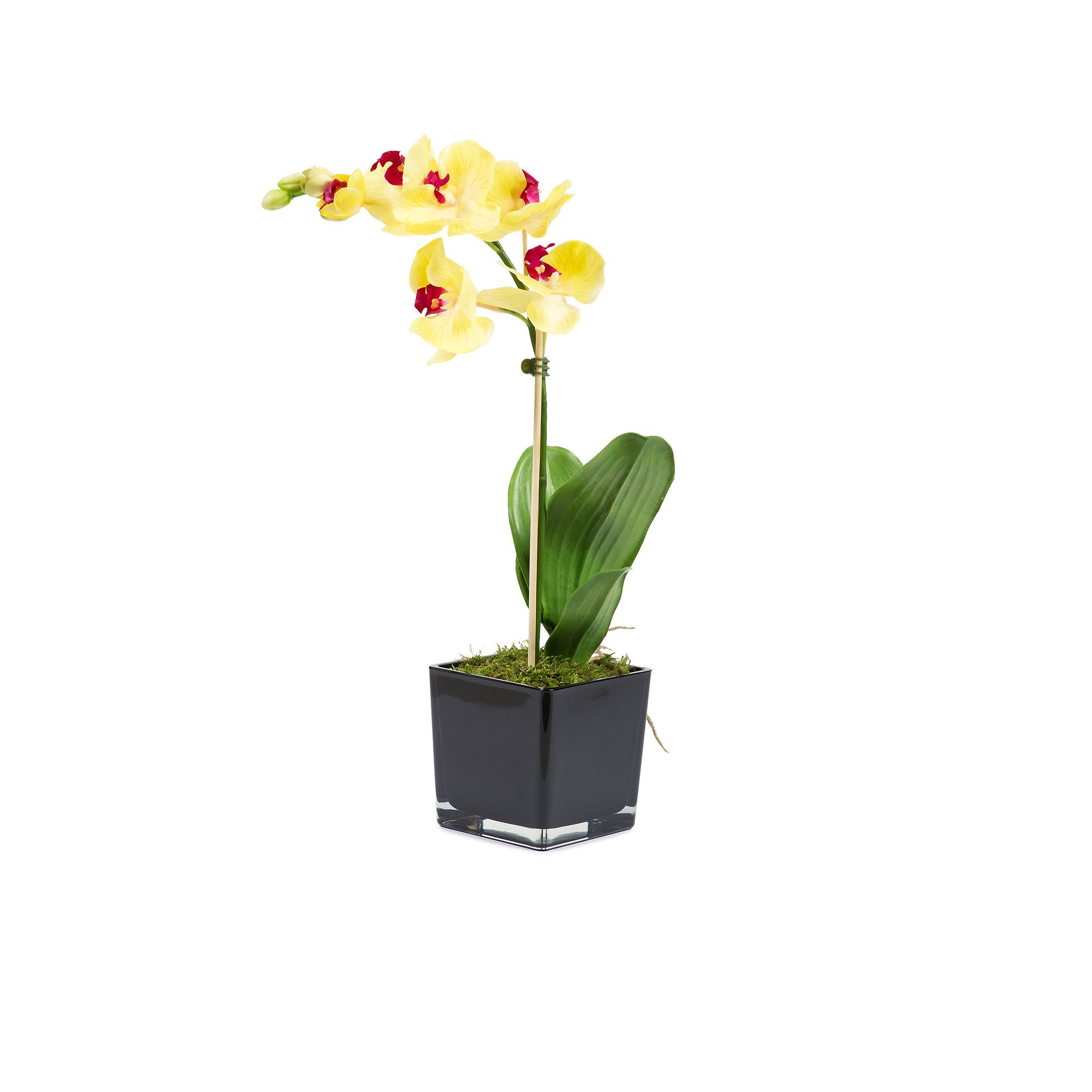 Orchidea in vaso a cubo di vetro qvc italia for Vaso orchidea