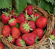 Cottage Farms 6-piece Sweet Kiss Strawberry Collection - M57006