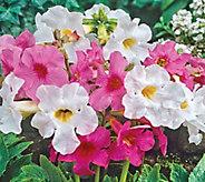 Brecks Mammoth 5 pc. Flowering Ferns Mix - M51909