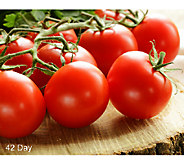 Cottage Farms 6-pc. Tomato Lovers Gourmet Collection Auto-Delivery - M50510