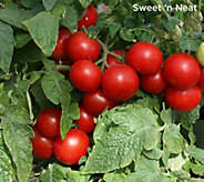 Robertas 6-Piece Vegetalis High Yielding Sweet Patio Edibles - M57211