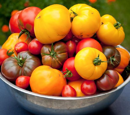 Roberta's 6-pc. Pick a Peck Heirloom Marriage Tomatoes