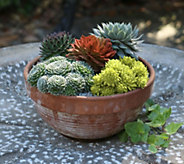 Cottage Farms 5-piece Chick Charms Hardy Succulents - M49022