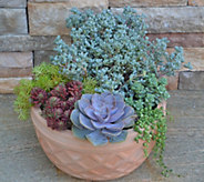 Cottage Farms Complete Succulent Garden Duo - M49024