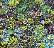 Robertas Cut and Plant Coco Fiber Succulent Landscape - M53025