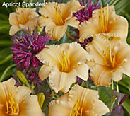 Cottage Farms 6-pc Everblooming Daylily Collection - M53226