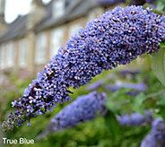 Cottage Farms True Blue Butterfly Patio Tree - M49029