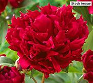 Robertas 2-piece Red Magic Garden Peony - M57029