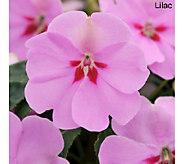 Cottage Farms 6-pc. Bounce Shade Loving Impatiens Collection - M46334