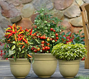 Cottage Farms 3-pc Bountiful Harvest Patio Vegetable Collection - M49835