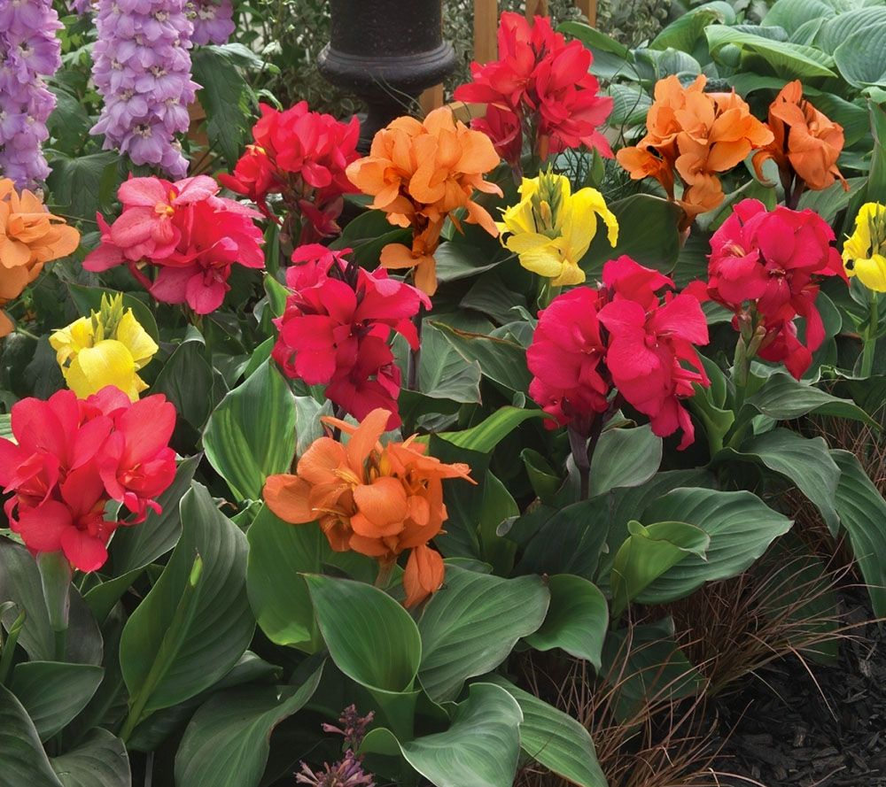 Cottage Farms 3-piece Cannova Canna Collection