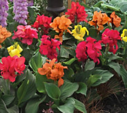 Cottage Farms 3-piece Cannova Canna Collection - M49037