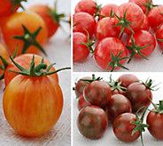 Cottage Farms 3-N-1 Mighty Mato Bumblebee Tomato - M57838