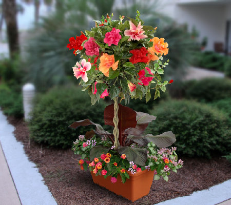 Cottage Farms Braided Double Flower Hibiscus 4 Color Tree - oukas info
