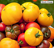 Robertas 6-piece Tomato Heirloom Marriage - M53139
