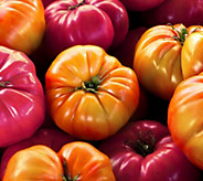 Cottage Farms Mighty 2Mato 2-N-1 Grafted Super Slicing Tomato - M56639