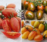 Cottage Farms 3-N-1 Mighty Mato Tiger Stripe Tomato - M57839