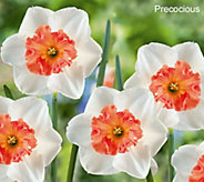 Robertas 20 Piece Trumpet Daffodil Collection - M50844
