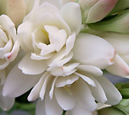 Robertas 8-piece Double Pearl Tuberose with Flower Magic - M53147