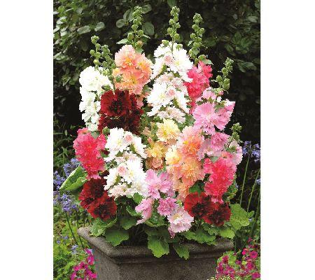 Roberta S Unique Gardens Flower Bulbs Plants