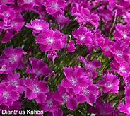 Cottage Farms Scentsational 6-pc Lavender & Dianthus Collection - M53253