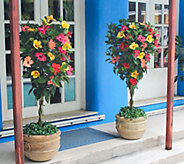 Cottage Farms Tropical Punch Braided Hibiscus Patio Tree - M56661