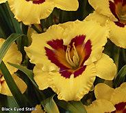 Cottage Farms 10-piece Premium Perpetuals Daylilies - M56664