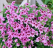 Robertas 4-piece Scented Citronella Geranium Collection - M53067