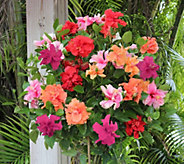 Cottage Farms Braided Double Flower Hibiscus 4 Color Tree - M48971