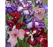 Cottage Farms 4-piece Jumbo Blooming Japanese Iris Collection - M48976