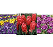 Robertas 195-piece Glorious Spring Garden Collection - M54976