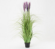 Indoor/Outdoor 55 Artificial Pampas Grass with Pot - M56078