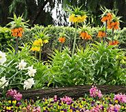Robertas 4 piece Fritillaria Imperial Maxima Collection - M54879