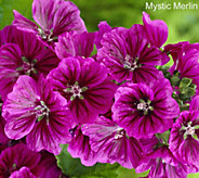 Robertas 4-piece French Hollyhock Duo Collection - M53083