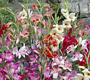 Cottage Farms 27-pc Hardy BloomPad Hummingbird Summer Garden - M53283
