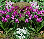 Robertas 2-piece Winter Hardy Orchids - M53086