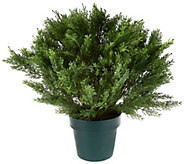 National Tree Feel Real 22 Globe Cedar Shrub with Growers Pot - M49194