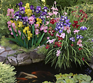 Cottage Farms 6-Piece Japanese and German Iris Collection - M50794