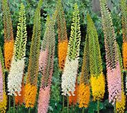 Robertas 3-piece Majestic Foxtail Lilies - M53194