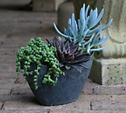 Cottage Farms 3-Piece Sunset Succulent Collection - M50796