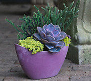 Cottage Farms 3-Piece Morning Sky Succulent Collection - M50797