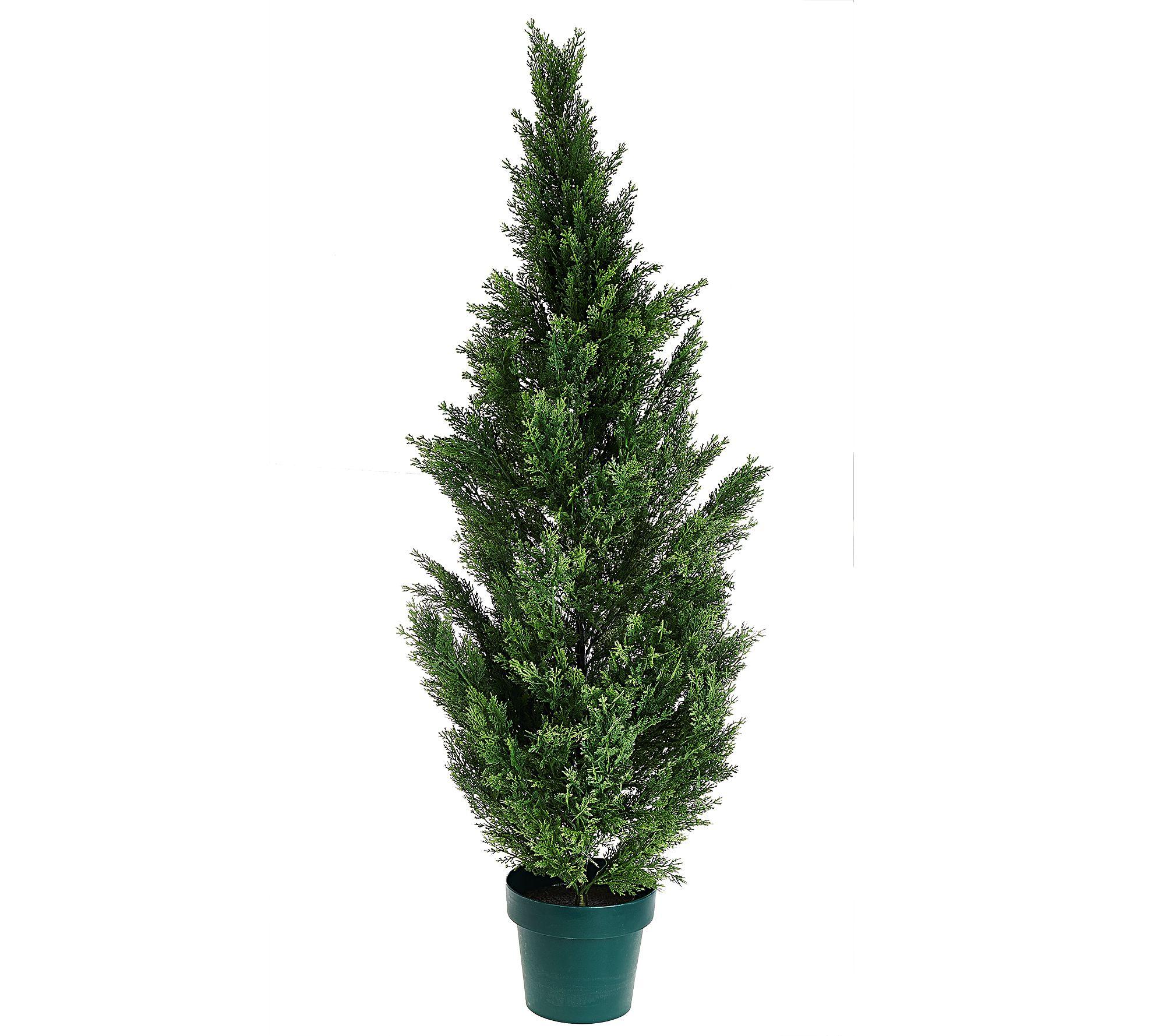 Real Live Christmas Trees For Sale