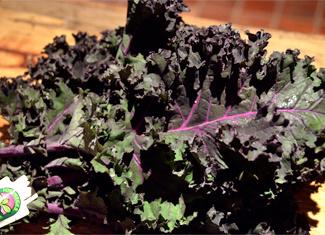 Kale Salad with HoneyBells